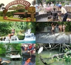Black River Safari,Y.S Falls And Appleton Rum Tour
